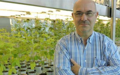 Nanotecnología de nutrición: las nano partículas del crecimiento